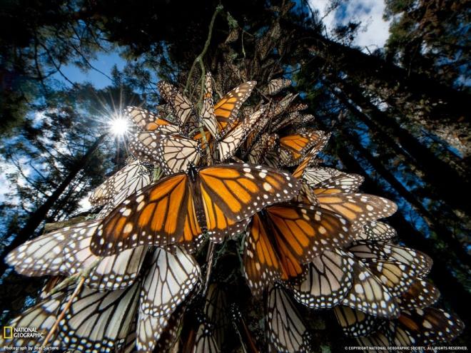 生命的奇迹:18张美轮美奂的动物大迁徙图(1)