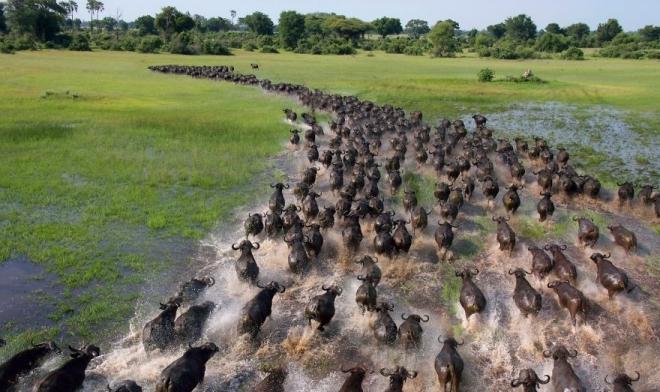 生命的奇迹:18张美轮美奂的动物大迁徙图(2)