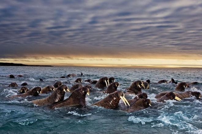 生命的奇迹:18张美轮美奂的动物大迁徙图(4)