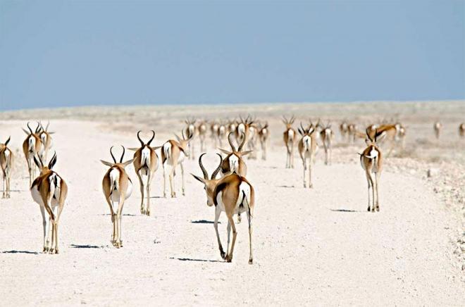生命的奇迹:18张美轮美奂的动物大迁徙图(5)