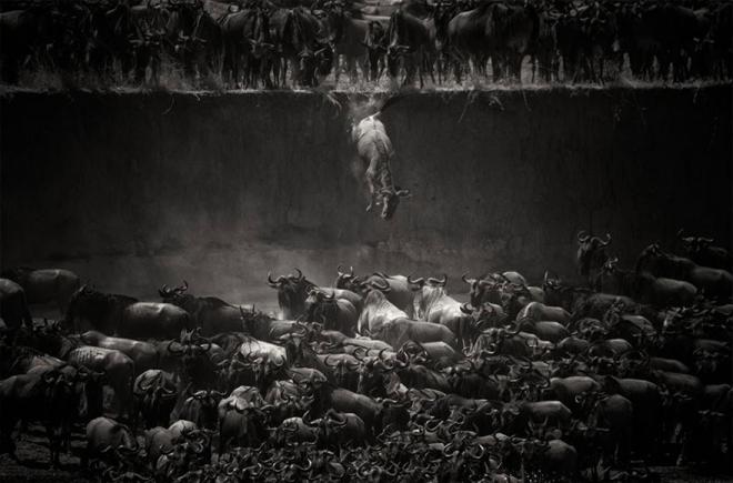 生命的奇迹:18张美轮美奂的动物大迁徙图(6)