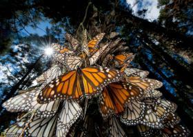 生命的奇迹:18张美轮美奂的动物大迁徙图