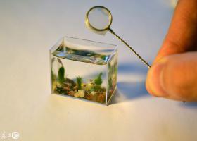 世界上最迷你的鱼缸,只装10毫升水
