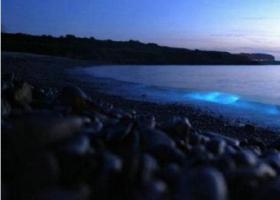 深圳西涌海域再现荧光海滩,宛如星空如梦似幻