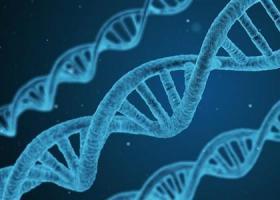 研究发现人与香蕉的DNA有60%是相同的