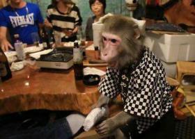 这家餐馆的服务员竟然是一只猴子