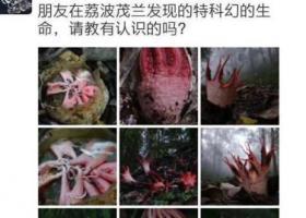 """贵州自然保护区出现红色""""恶魔爪子"""""""